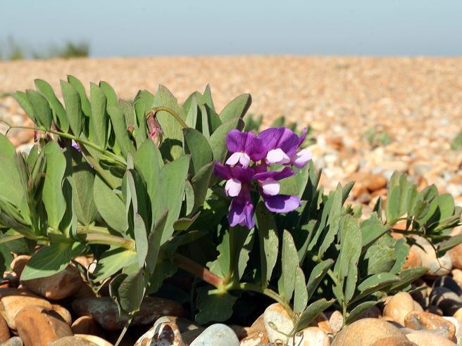 Resilienza «trasformativa»: la lezione delle piante (e dei numeri) per reagire alla crisi